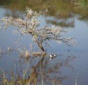 zdjęcie jeziora1